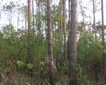 Bắt giam 6 đối tượng về hành vi hủy hoại rừng - ảnh 1