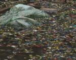 Cơ  sở tái chế nhựa xả thải gây ô nhiễm môi trường nghiêm trọng