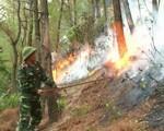Cháy rừng tại Nam Đàn, Nghệ An