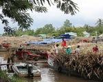 Hậu Giang: Mía dư thừa vì nhà máy đường đóng cửa