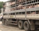 Thực hiện các biện pháp phòng chống dịch tả lợn châu Phi