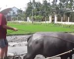 Khi nông dân làm du lịch