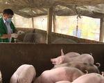 TP.HCM hỗ trợ tiền cho lực lượng phòng, chống dịch tả lợn châu Phi