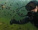 Thợ lặn bơi giữa hàng trăm con nòng nọc