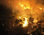 Cơ bản khống chế vụ cháy rừng phòng hộ ở Bình Định