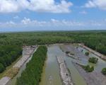 Carbon xanh và các chính sách bảo vệ rừng ngập mặn