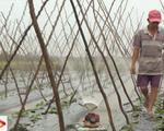 Máy tưới rẫy tự động của nông dân An Giang
