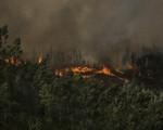Số vụ cháy rừng tăng kỷ lục tại Brazil