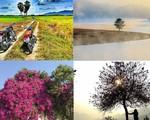 Những cây xanh vô tình trở thành điểm 'sống ảo' khiến giới trẻ mê mệt