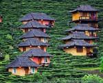 Ghé thăm ngôi làng giữa đồi chè đẹp tuyệt ở Thái Lan