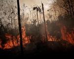 Cháy rừng Amazon tiếp tục lan rộng