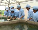 Khan hiếm nguồn giống cá tra chất lượng cao