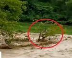 Cứu người đàn ông bám ngọn cây giữa dòng lũ dữ ở Thanh Hóa