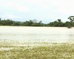 Đắk Lắk: Mưa lũ khiến 1 người chết, hàng ngàn hecta hoa màu bị ảnh hưởng