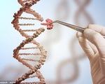 Các nhà khoa học Trung Quốc điều trị HIV, ung thư bằng công nghệ chỉnh sửa gen