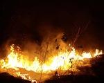 Chính sách cho phá rừng làm nông nghiệp tại Brazil và tình trạng cháy rừng Amazon