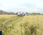 Nhân rộng mô hình trồng lúa bằng công nghệ hữu cơ tại ĐBSCL