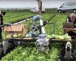 Nông dân Mỹ thường làm gì vào mùa đông để đảm bảo lượng lương thực? - ảnh 1