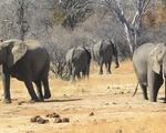 LHQ cấm đưa voi hoang dã vào sở thú