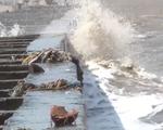 Hết bờ biển Tây, Cà Mau lại ban bố tình huống khẩn cấp sạt lở bờ biển Đông - ảnh 1