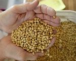 Trung Quốc xác nhận mua thêm nông sản Mỹ