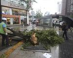 Bão Lingling đổ bộ vào Triều Tiên, khiến ít nhất 5 người thiệt mạng