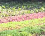 Xây dựng chuỗi sản xuất và tiêu thụ nông sản hữu cơ