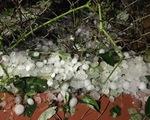 Người trồng cam Hà Giang thiệt hại nặng do cam rụng - ảnh 1