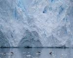 Đường băng trên sông băng tại Mỹ - ảnh 1