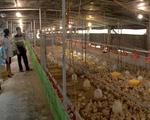 Hiệu quả từ mô hình phát triển kinh tế trang trại tại Hải Dương
