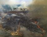 Rừng Amazon bên bờ vực trở thành vùng đồng cỏ