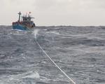 Cứu hộ kịp thời tàu cá và 13 ngư dân Bình Định gặp nạn trên biển