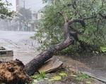 Bão số 13 có hoàn lưu rộng, gây gió mạnh, mưa lớn trên diện rộng