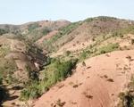 Khởi tố 2 bị can vụ phá rừng quy mô lớn ở Kon Tum