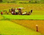 Thủ tướng đồng ý chuyển mục đích sử dụng 21,17ha đất trồng lúa tại Cần Thơ - ảnh 1
