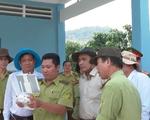 Kiểm tra tình hình khô hạn, phòng chống cháy rừng tại An Giang
