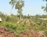 Cảnh báo cháy rừng tại Tây Nguyên, Nam Bộ - ảnh 1