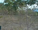Ninh Thuận giảm diện tích trồng lúa để thích ứng khô hạn
