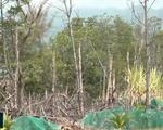 Buông lỏng quản lý trong vụ phá rừng bần Tuần Lễ