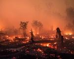 Indonesia làm mưa nhân tạo để chống cháy rừng