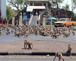 Khỉ đói tràn xuống đường phố ở Thái Lan tranh giành thực phẩm