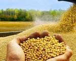 Giá nông sản Mỹ giảm mạnh