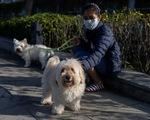 Hong Kong (Trung Quốc) ghi nhận thêm một chú chó mắc COVID-19