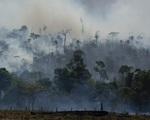 Rừng Amazon tại Brazil tiếp tục bị tàn phá nghiêm trọng