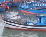 Đà Nẵng xử lý hơn 100 tàu cá ngoại tỉnh vi phạm các quy định về khai thác hải sản