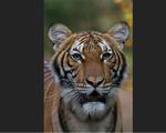 Cô bé đem âm nhạc vào sở thú Thái Lan - ảnh 1