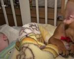 Chơi đùa cùng những chú chó - Phương pháp trị liệu mới cho các bệnh nhi ở Ba Lan