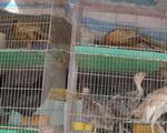 Điểm nóng buôn bán động vật hoang dã tại chợ chim lớn nhất miền Tây