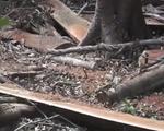 Khởi tố thêm 2 bị can vụ phá rừng ở Kon Tum