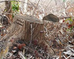 Núi Voi ở Bình Thuận đang bị 'bức tử'
